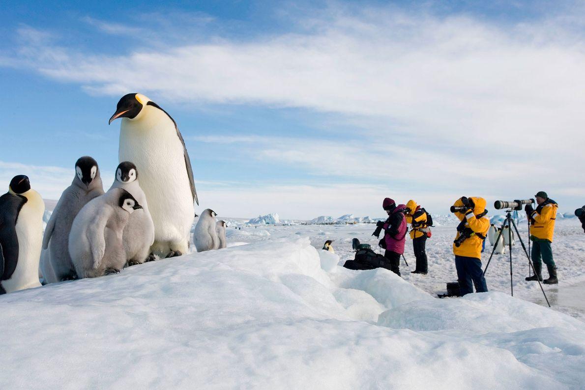 Penguin watching, Antarctica