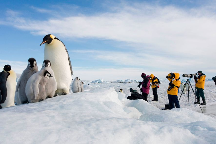 Antarctica Snow Hill Island Photographers from cruise take pictures at emperor penguin rookery
