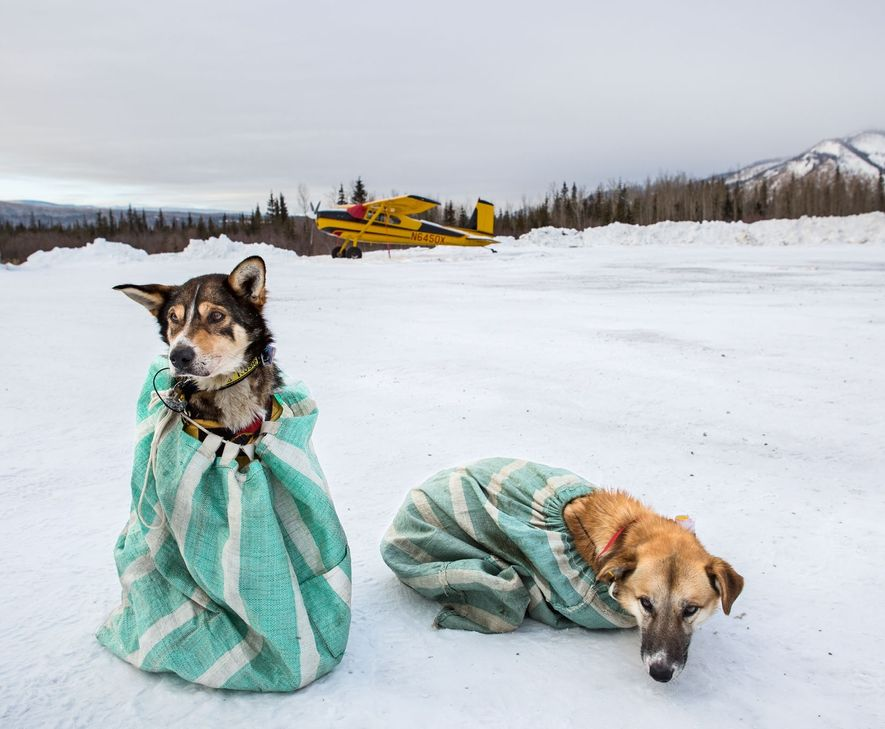 At a gruelling subarctic race, a photographer finds calm