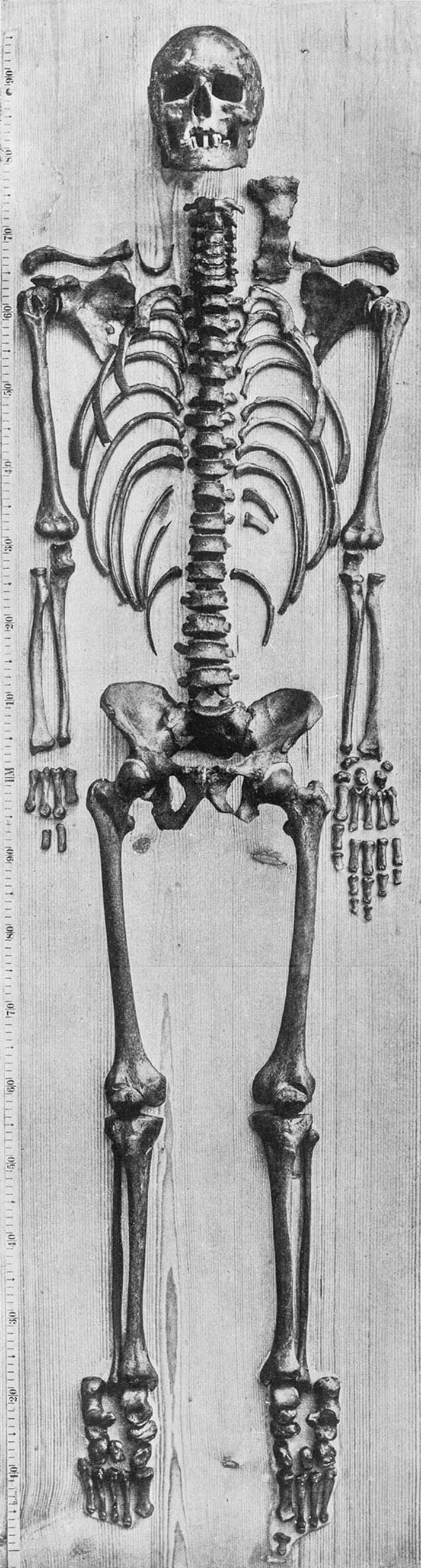 What's believed to be Bach's skeleton, photographed in 1895 by anatomist Wilhelm His. Andreas Otte examined ...