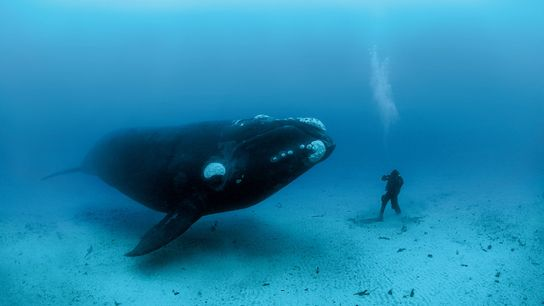 In New Zealand's Auckland Islands, Skerry captured his assistant Mauricio Handler's close encounter with a Southern ...