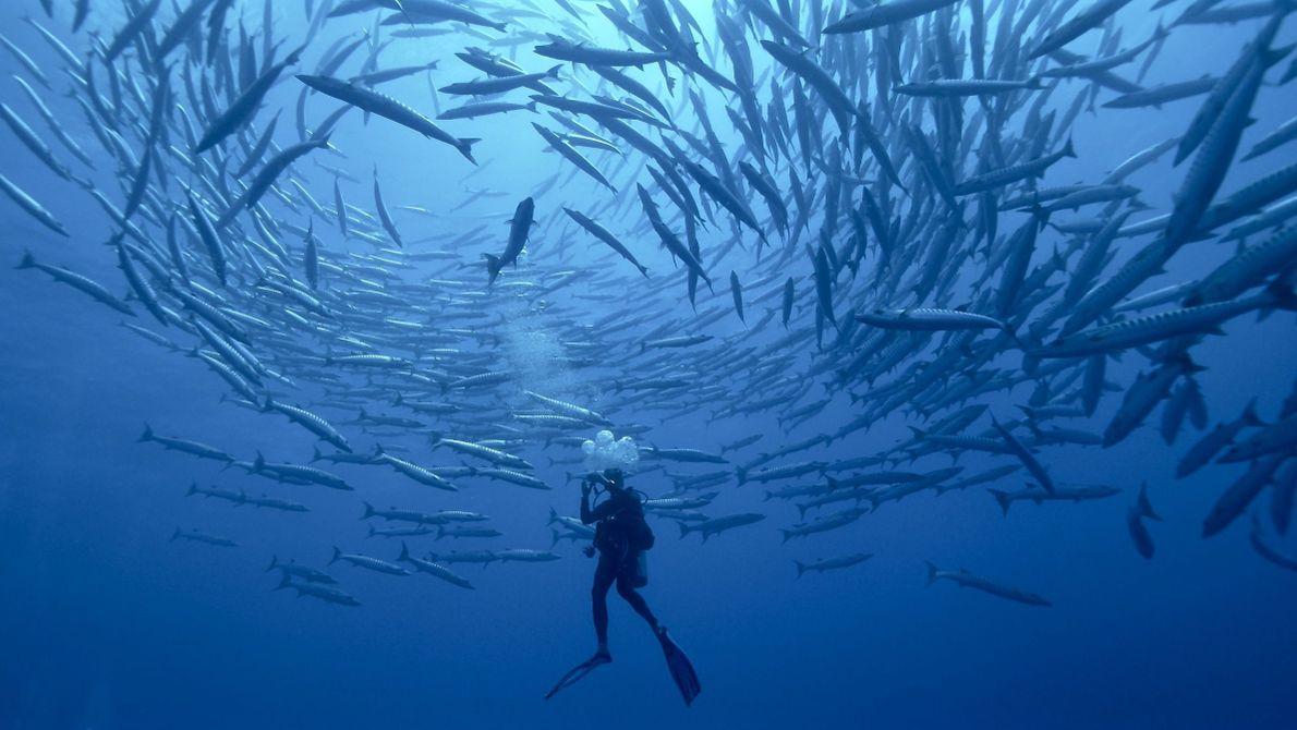 Diving School