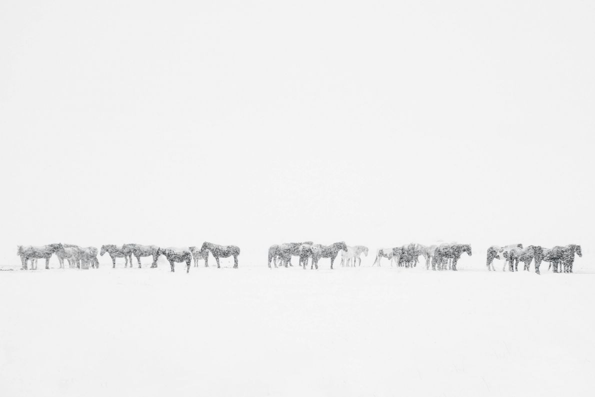 Surreal Pastures