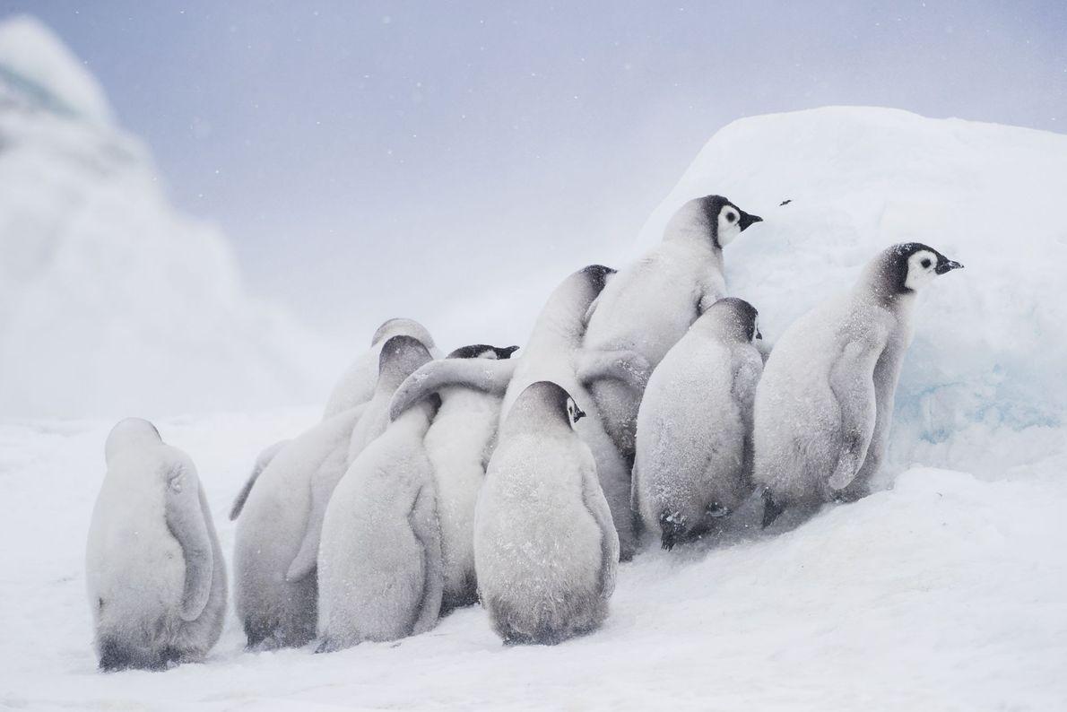 Group Huddle