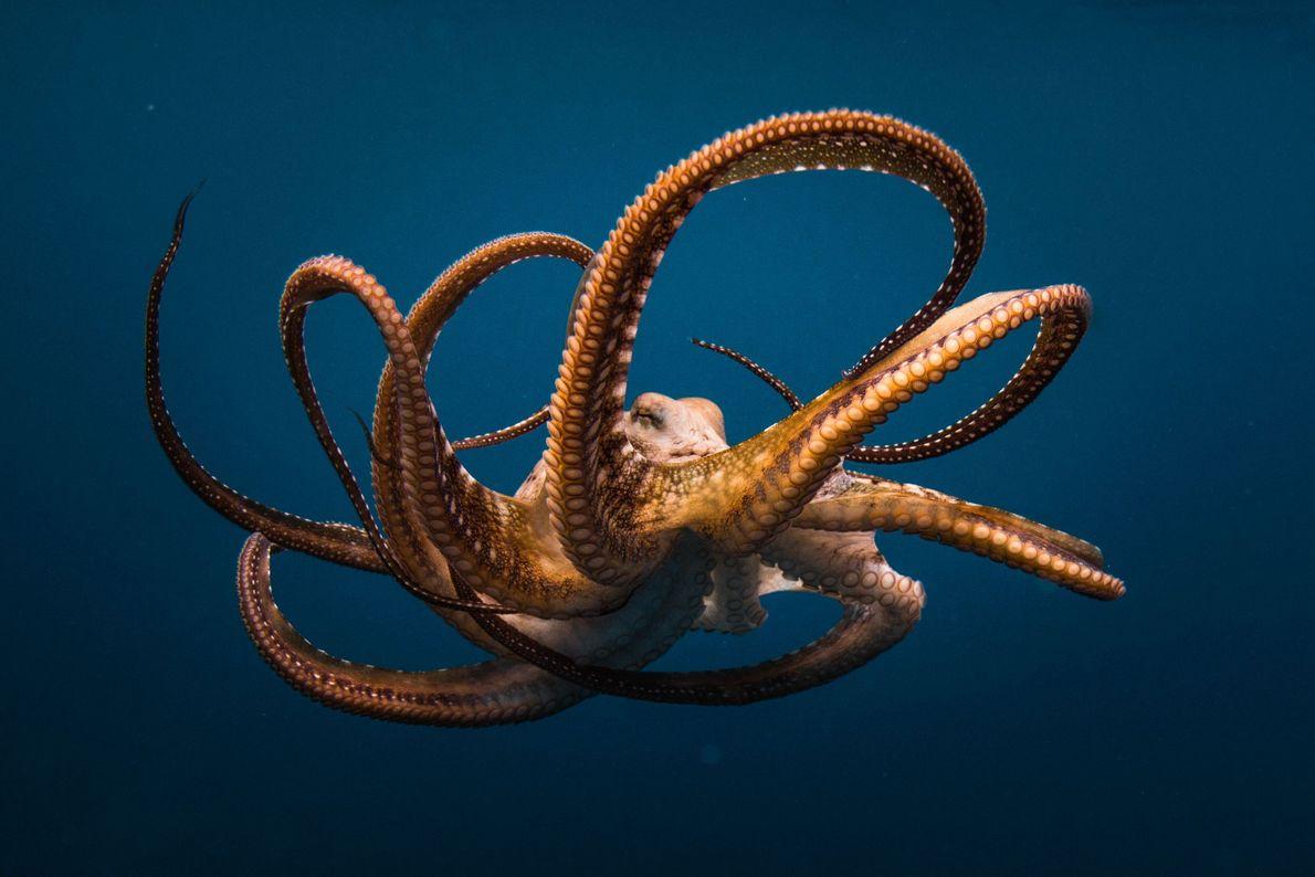 Underwater Drama