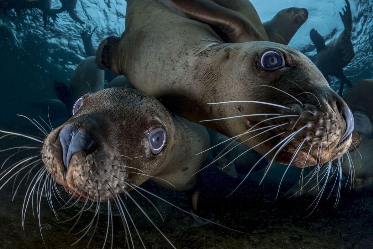 Underwater Curiosity