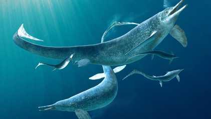 13-foot marine predator found inside another's belly in shocking fossil 'turducken'