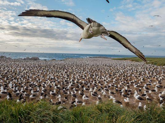 The Falkland Islands Preserve Wildlife and Habitat After War