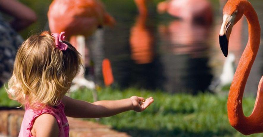 Visiting flamingos, Florida.