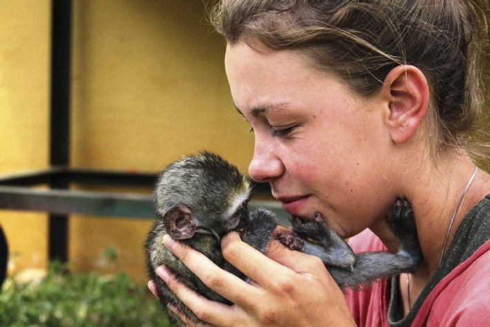 A volunteer holds a baby capuchin monkey