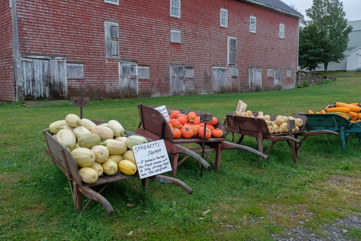 A roadside farmers' market uses the honesty-box system to make payments in the Annapolis Valley.