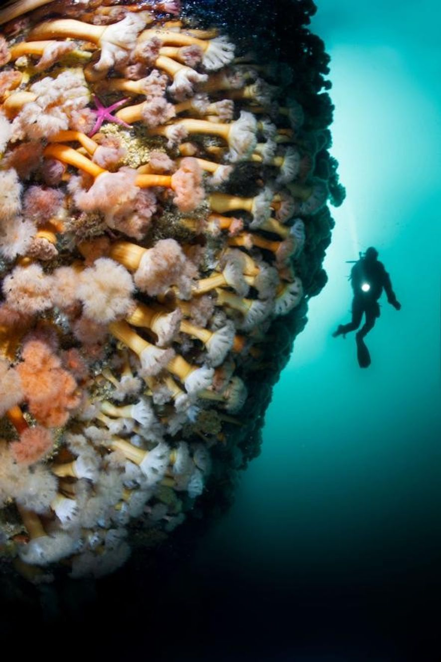 Photographer and explorer David Doubilet has been an ambassador for Rolex since 1994 and has produced nearly 70 stories for National Geographic. Doubilet photographed this fjord wall covered with sea anemones in Bonne Bay, in Newfoundland's Gros Morne National Park.