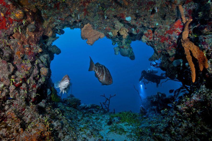 Marine biologist David Gruber scuba dives off Little Cayman in the Caribbean's Cayman Islands.