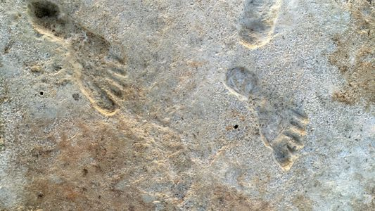 Fossil footprints challenge theory of when people first arrived in Americas