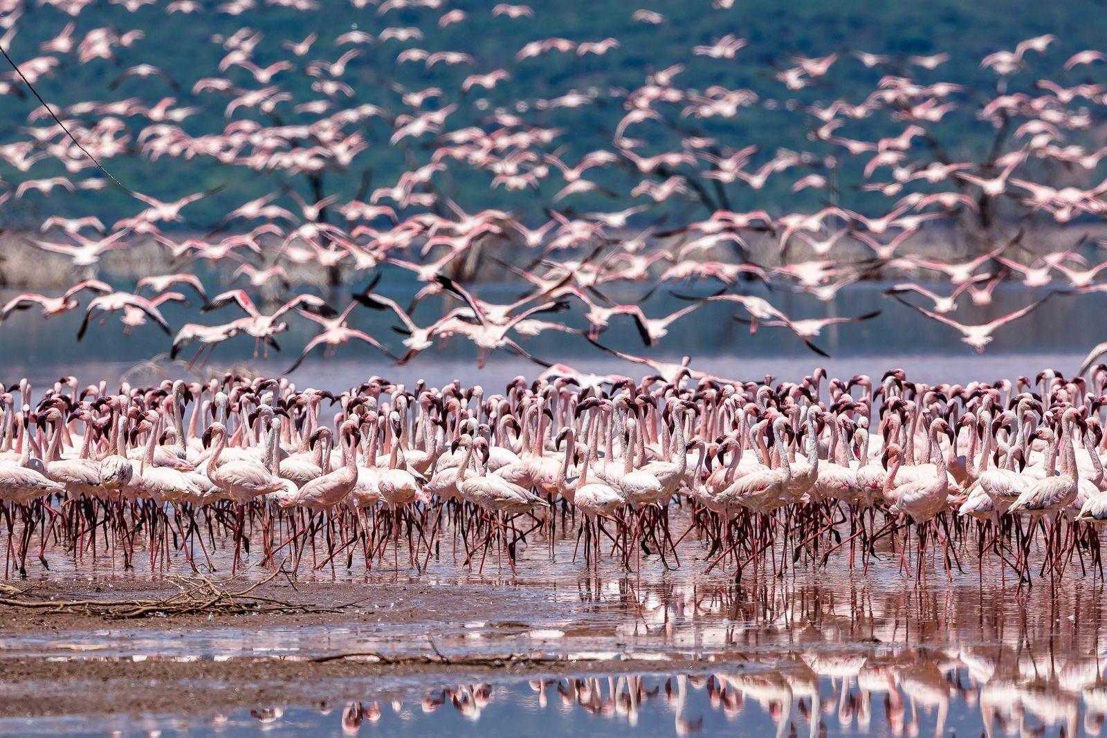 Flamingo Season