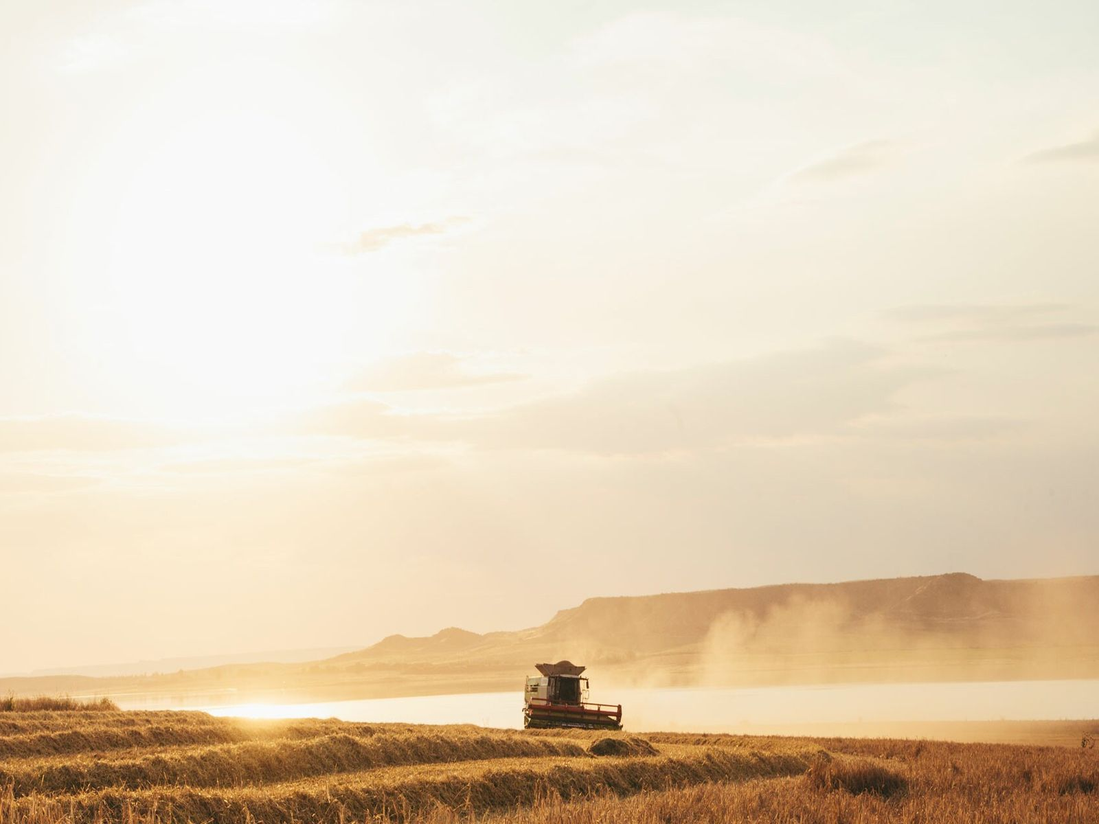 The finest barley is an ingredient that plays a starring role in Estrella's distinctive fresh flavour.