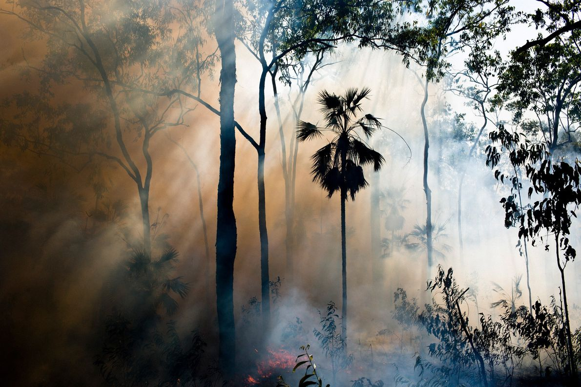 A controlled bush fire burns on Melville Island, a method used to reduce the likelihood of ...