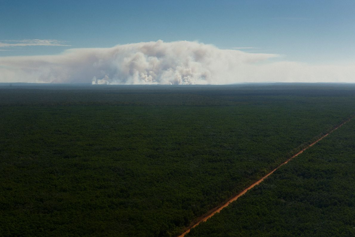 A line of fire cuts across the lush landscape. Fires are lit to to reduce the ...