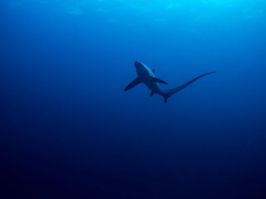 Mystery event caused shark populations to crash 19 million years ago
