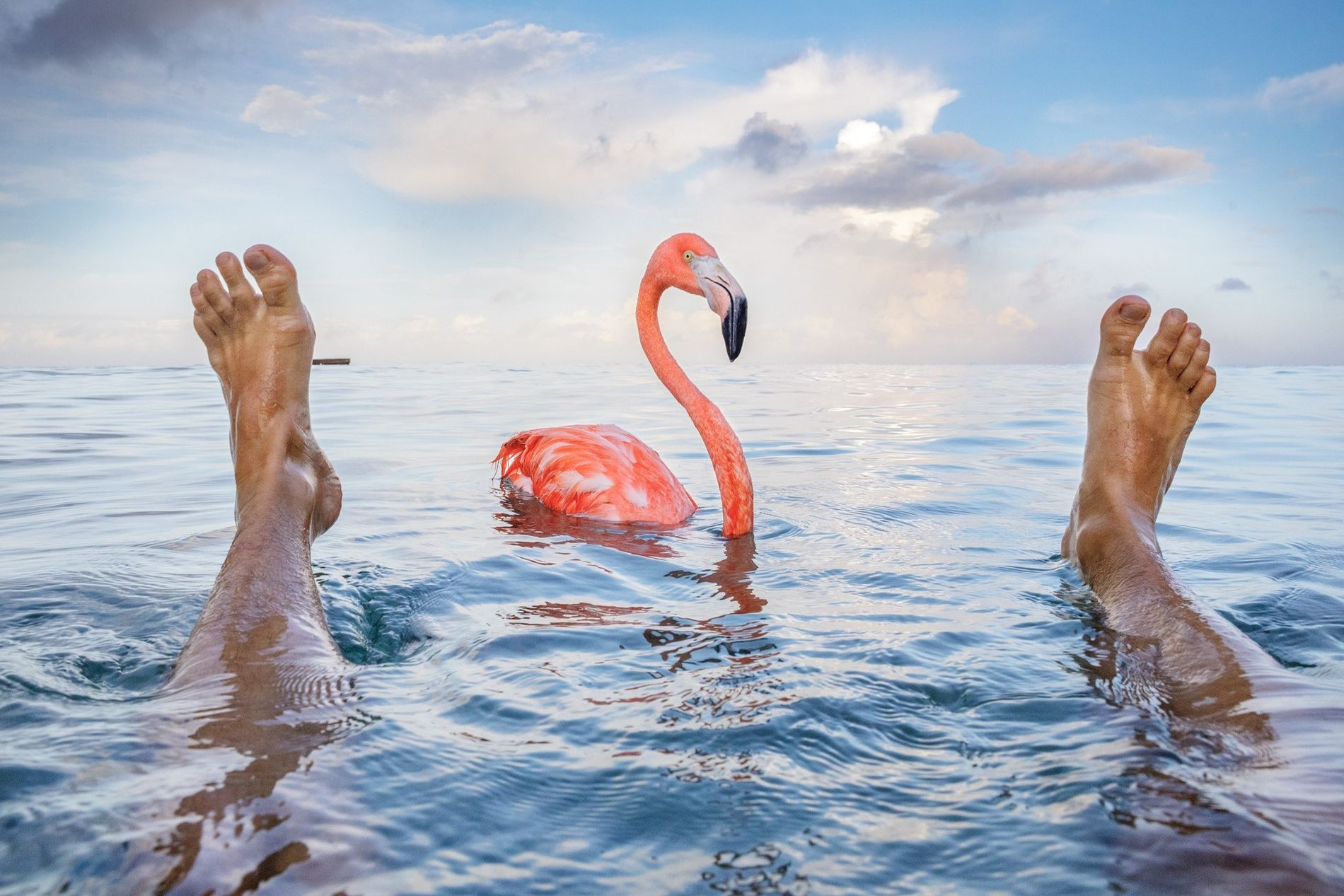 Photographer Jasper Doest, Odette's cousin, swims with Bob in the Caribbean Sea.