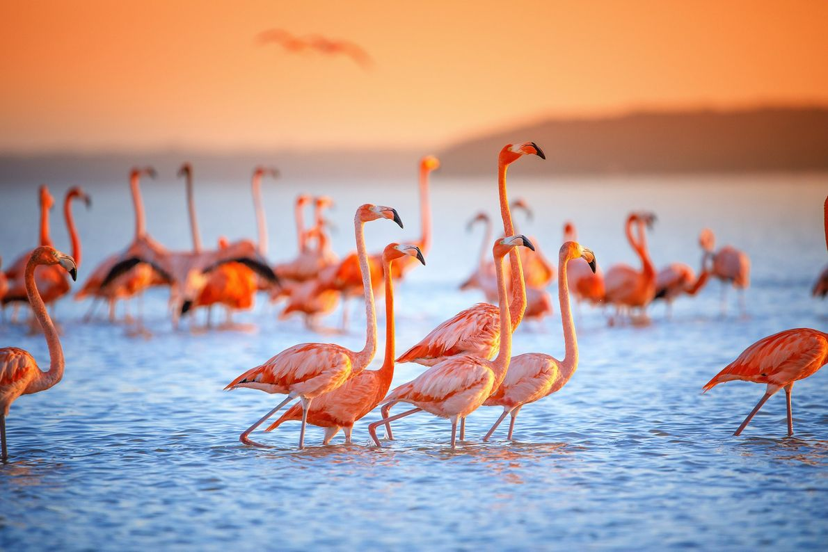 This was shot on a boat ride to view flamingos wading in the saltwater flat in ...