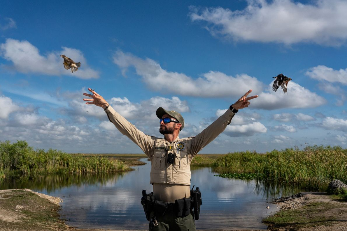 Thousands of migratory songbirds are caught in Florida each year to supply a thriving illegal market. ...