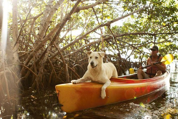 Captain Bill Keogh kayaking near Big Pine Key.