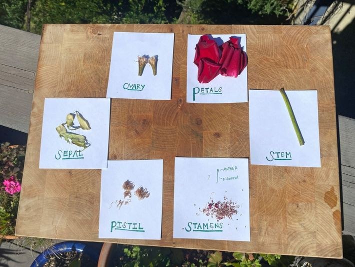 Flower - Spring Science Experiments