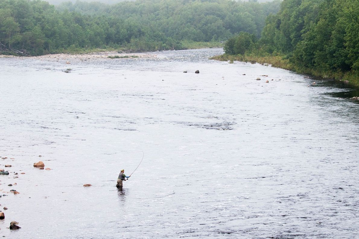 A fly fisherman tests the waters of the Chéticamp River in Cape Breton Highlands National Park. ...