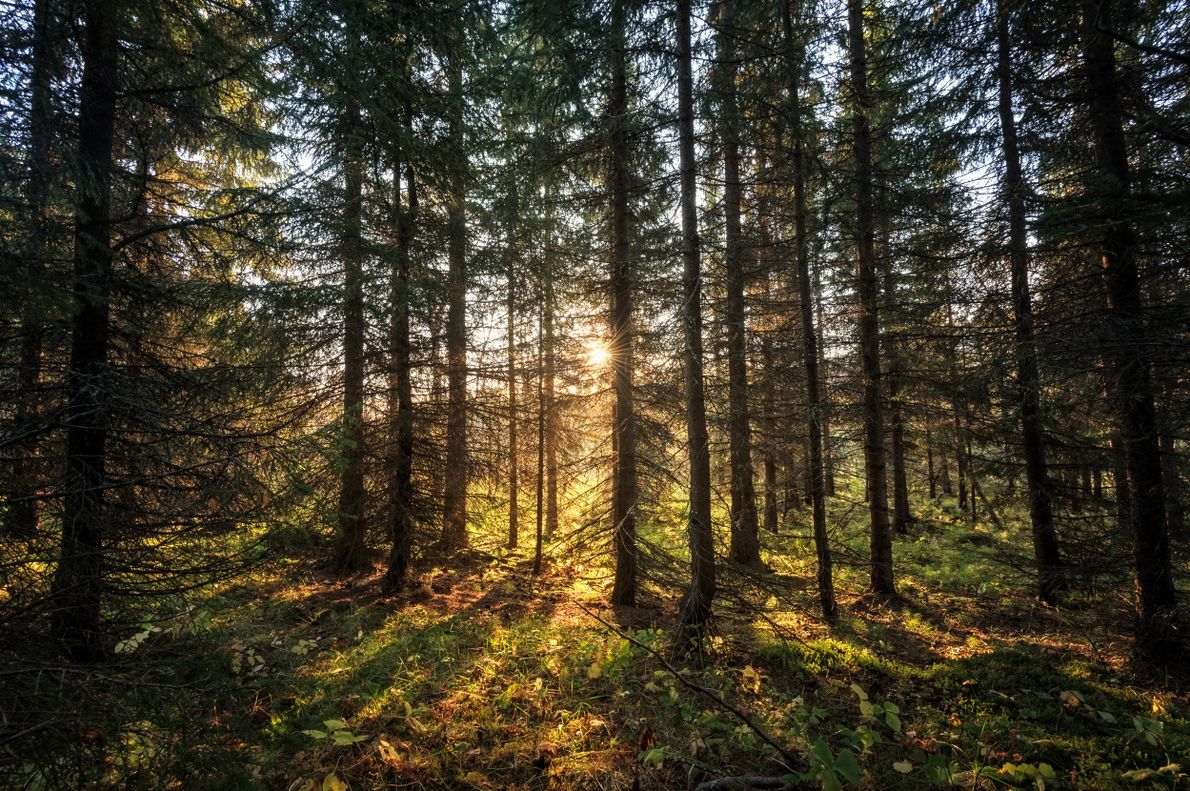 The first glimpse of the rising sun in the rural recreation area of Folkeparken, Harstad - ...