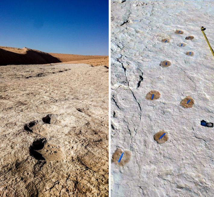 Elephant (left) and camel (right) trackways were among the fossil footprints found around the ancient lake. ...