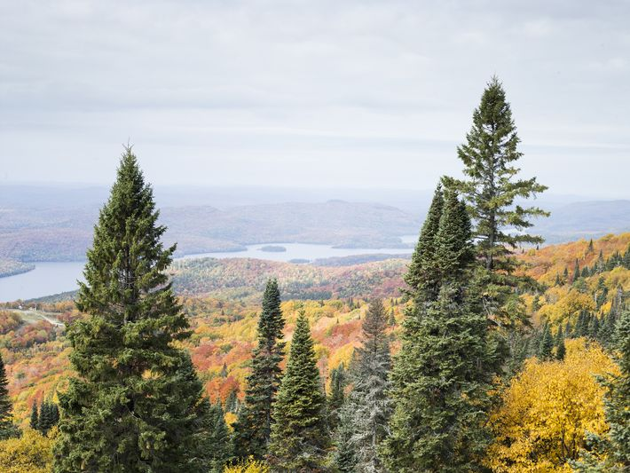 Fall leaves boast bright colors on a mountain slope near Mont-Tremblant.