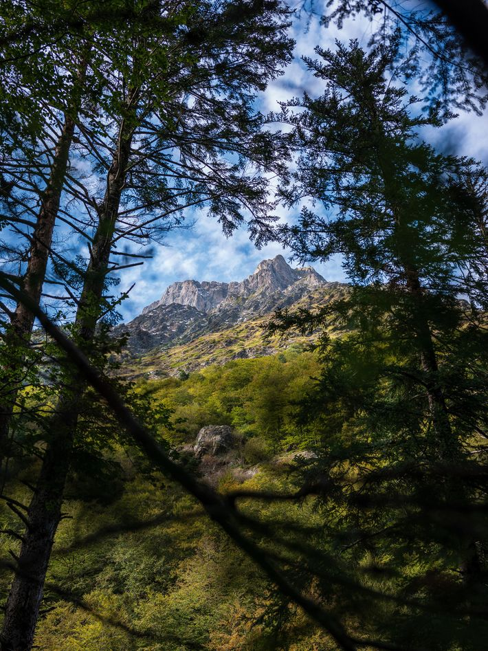 The Pyrenees glimpsed through the forest near Pont du Prat, Loudenvielle.