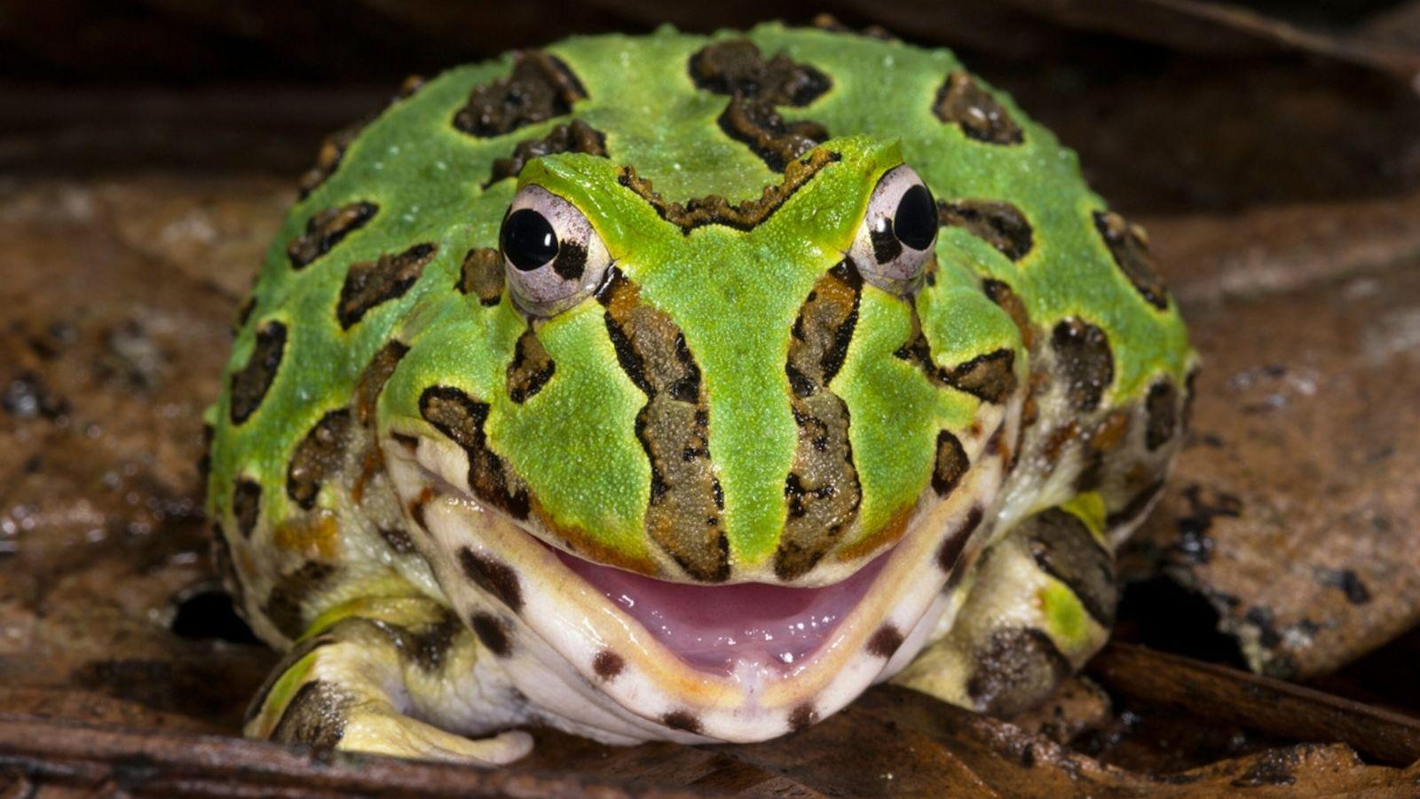 Frog - World Animal Day