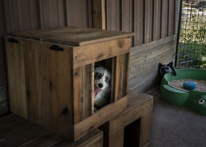 A newly rescued fox named Luka is confined to his enclosure while she acclimates to the ...