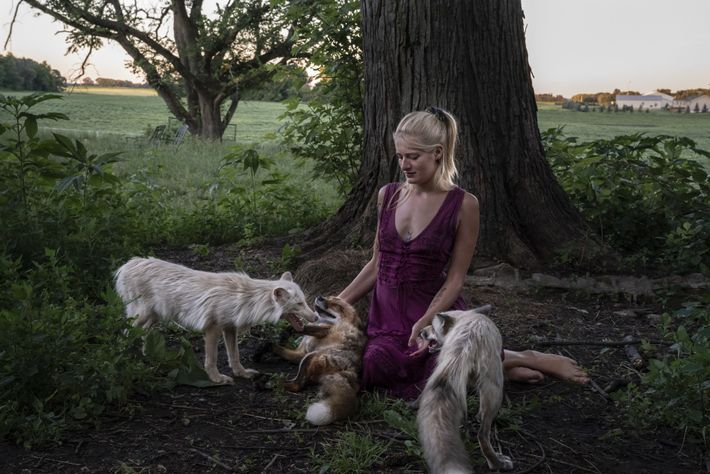 Foxes surround Raines, their rescuer, as she sits in front of an oak tree on her ...