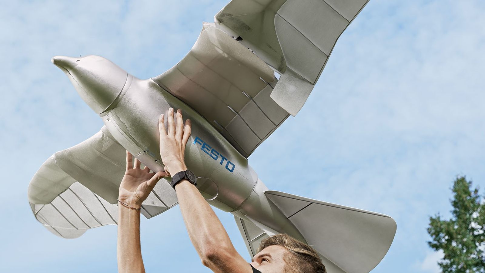 The SmartBird, an ornithopter created by the company Festo, flies so well because it twists its ...