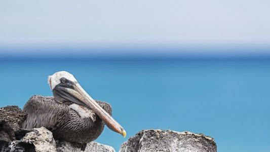 Galapagos: A world within itself