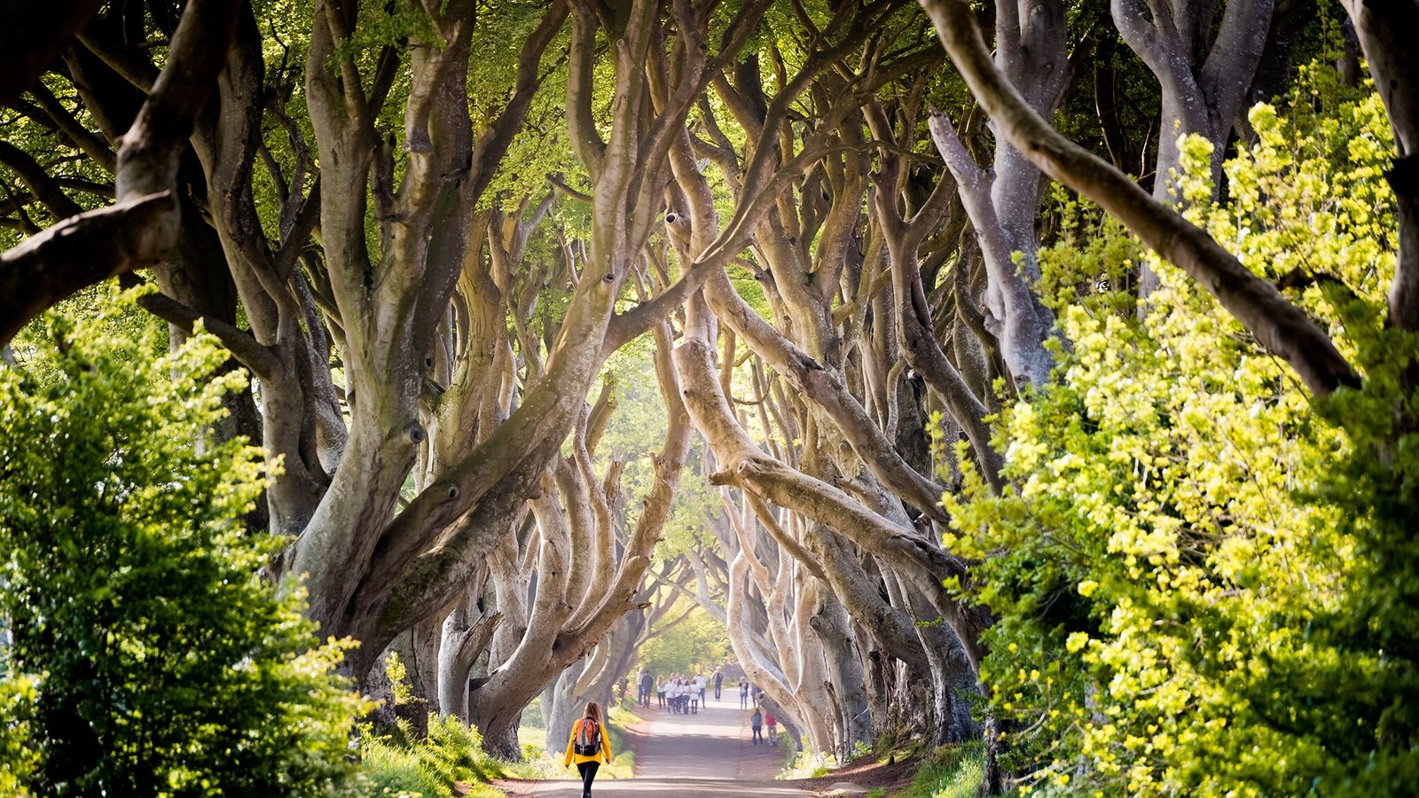 Situated an hour's drive from Belfast, the Dark Hedges are just one of 25 filming locations ...