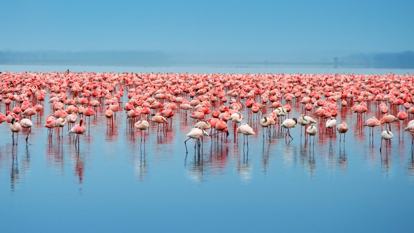Home to the greatest bird show on earth, Lake Nakuru is the place to see the ...