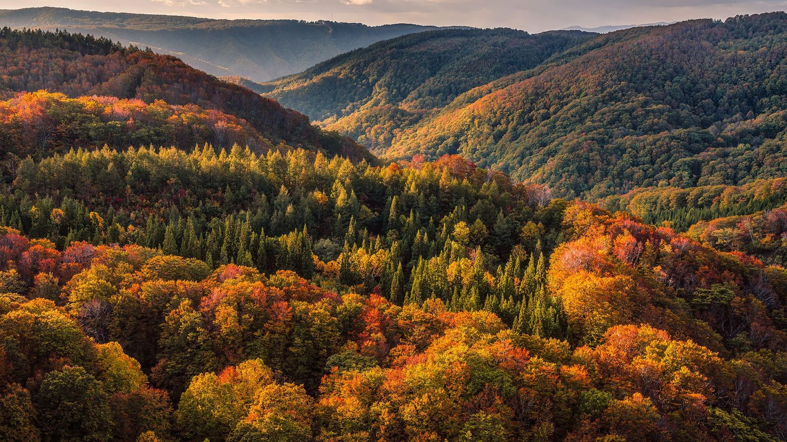 Tohoku's woodland turns vivid shades of russets and golds in autumn.