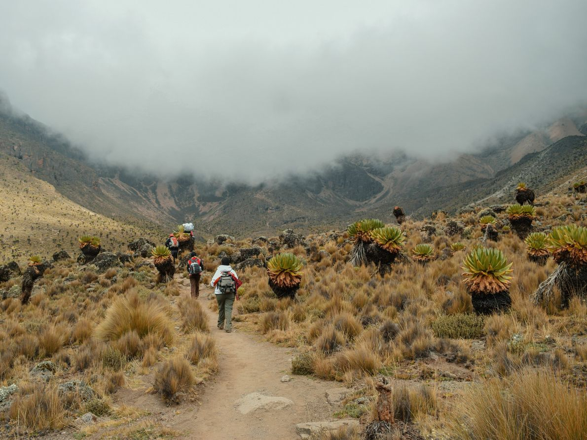 Located within Mount Kenya National Park, the mountain offers several challenges for climbers. Only advanced mountaineers should ...