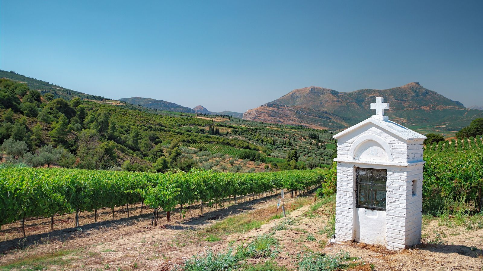 A vineyard located in the Nemea winelands, in the Peloponnese — Greece's largest wine region.