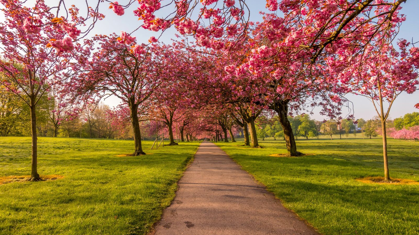 The National Trust is offering a sight for sore eyes this spring in the spirit of ...