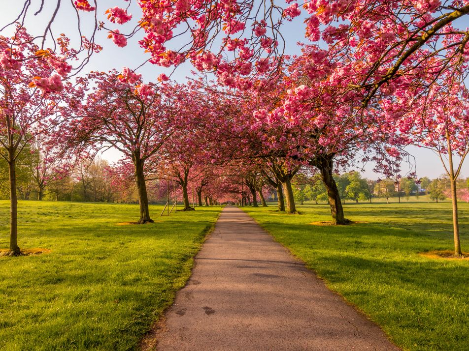 How the National Trust's 'blossom circles' will brighten the UK's cities