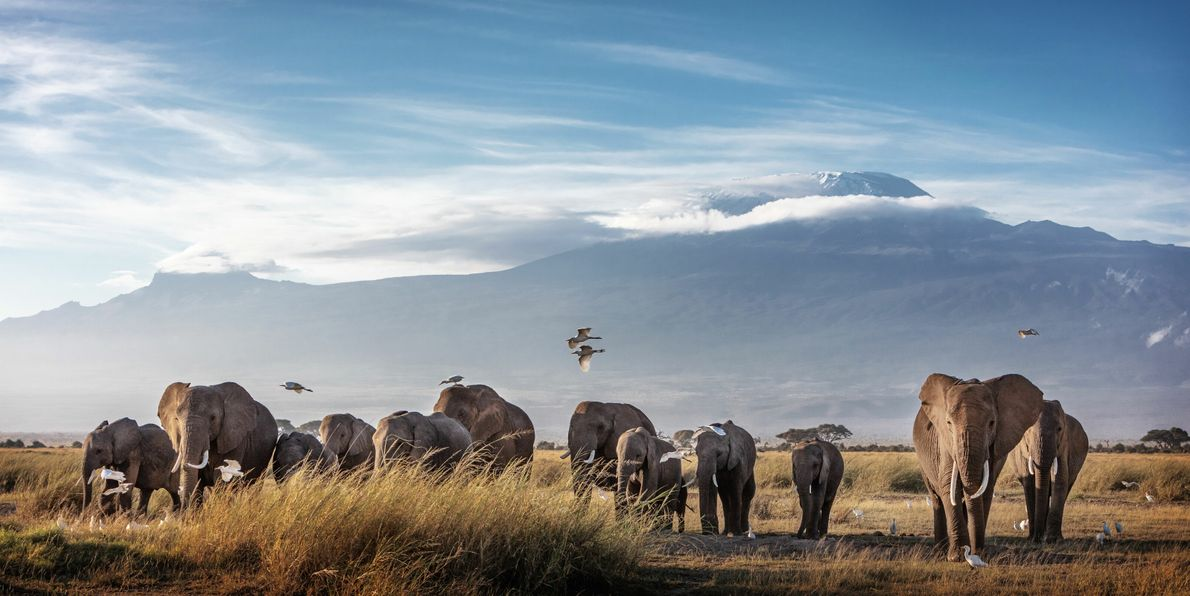 Beyond its vast elephant population, Amboseli's claim to fame is the view of Mount Kilimanjaro, the ...
