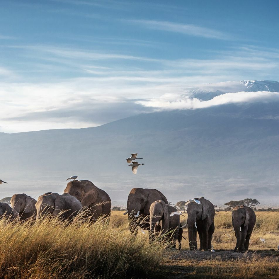 In pictures: the call of the wild in Kenya