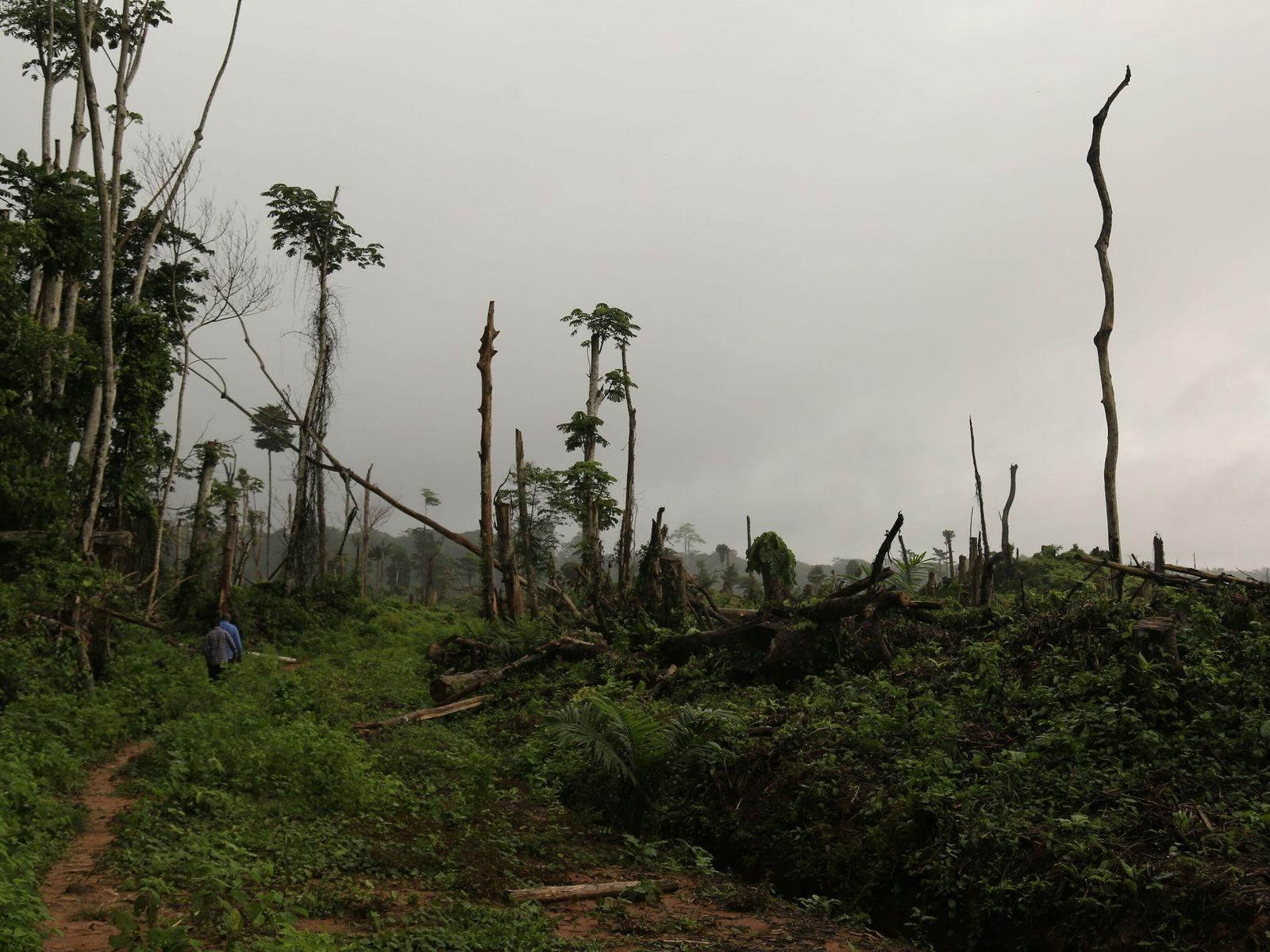 rainforest-vulnerability-index