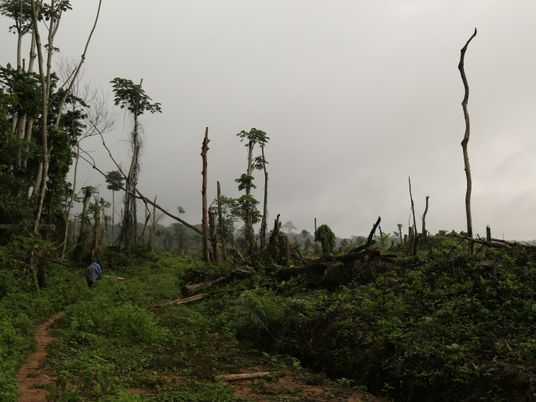 Can a new way to measure tropical rainforest vulnerability help save them?