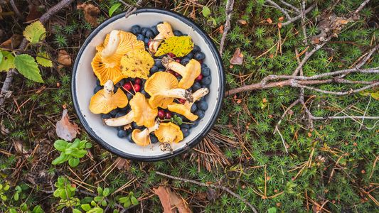A beginner's guide to foraging for wild ingredients in the UK